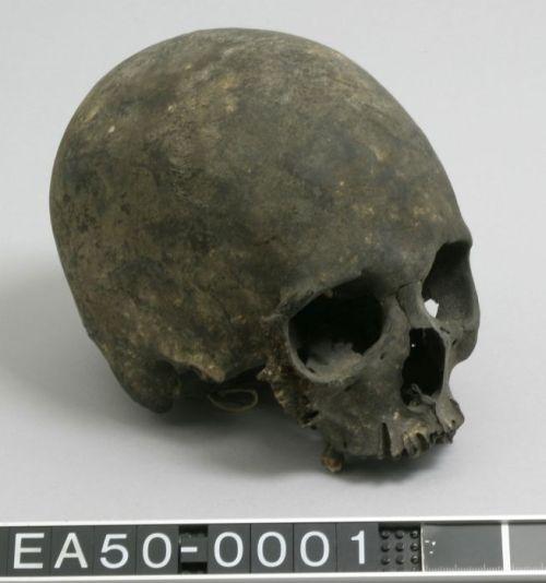 headhunting, skull, philippines, moesgaard museum, de etnografiske samlinger, ethnography, collections, museum, aarhus, denmark