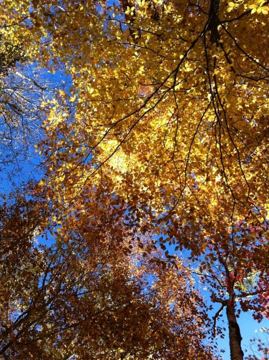 autumn, fall, colours, colors, moesgaard museum, aarhus, aarhus2017, papua new guinea, australia, qatar, malaysia, indonesia, new hampshire, new england, leaf peeping